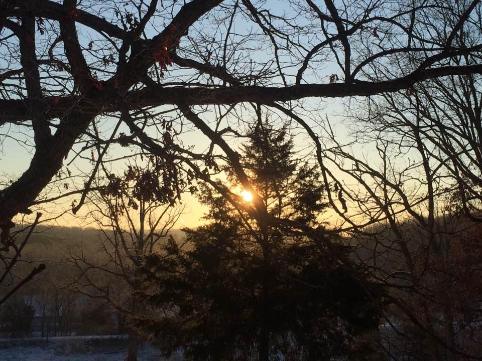 sun through tree - washington county guide