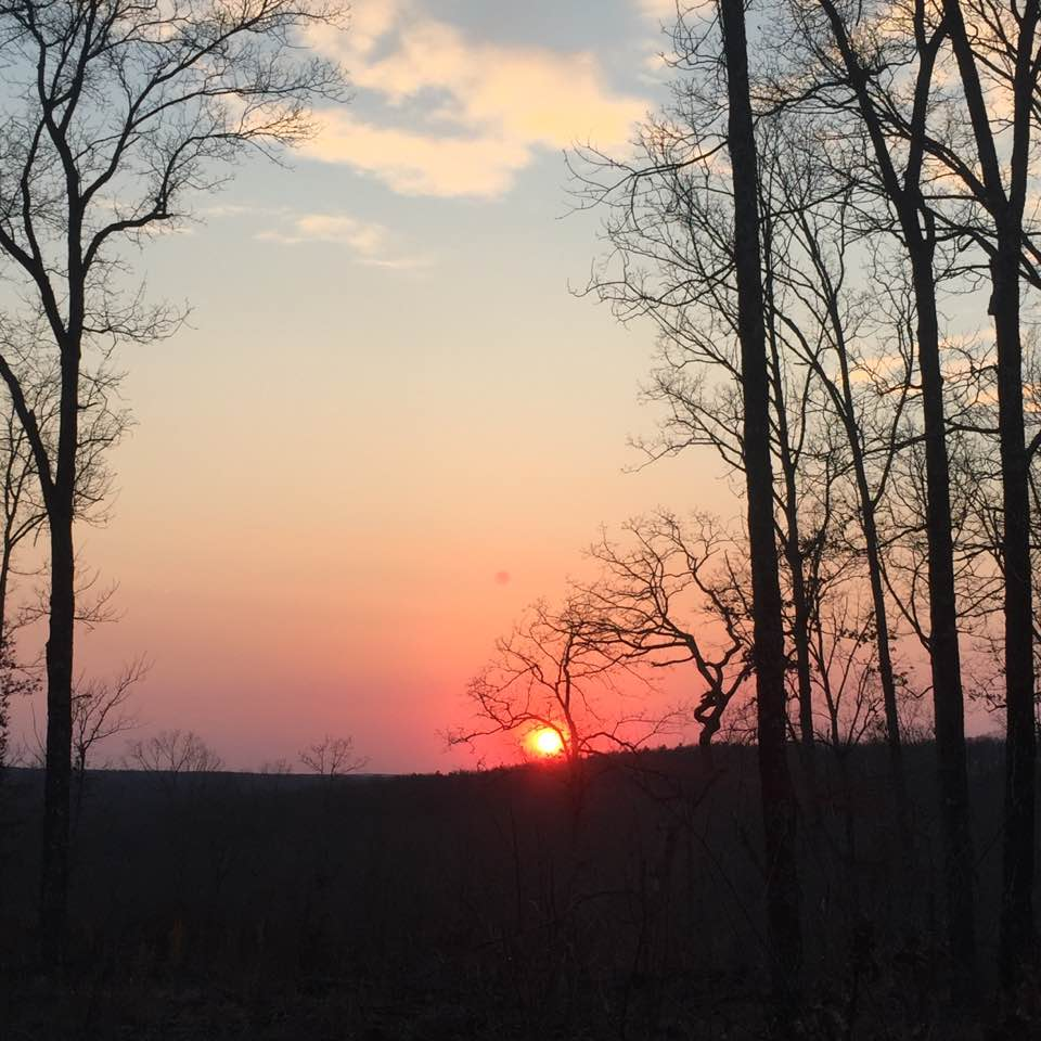 sunset through trees - washington county guide