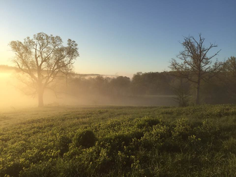 mist over field - washington county guide